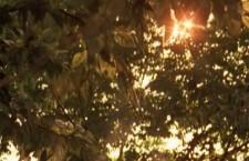 La luz acelerada: AIR y el recreo infinito